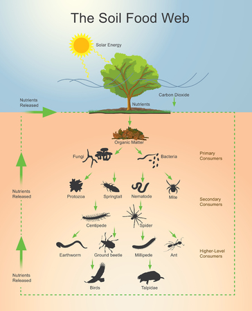 Illustration pour The soil food web is the community of organisms living all or part of their lives in the soil. It describes a complex living system in the soil and how it interacts with the environment, plants, and animals. Vector, Illustration. - image libre de droit