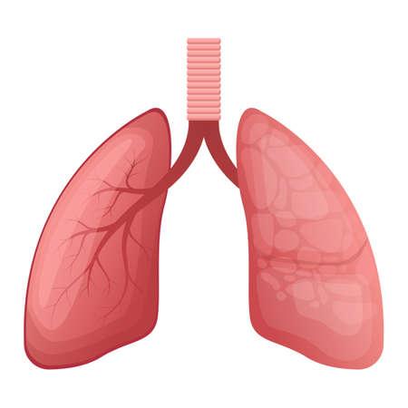 Illustration pour Lungs vector design illustration isolated on white background - image libre de droit