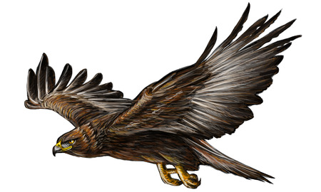 Golden eagle flying hand draw and paint on white background vector illustration.