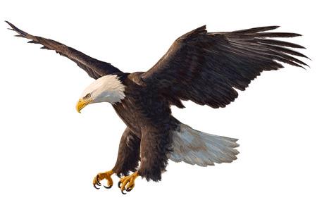 Illustration pour Eagle swoop hand draw and paint on white background vector illustration. - image libre de droit