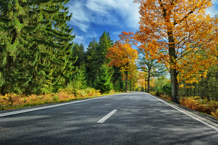 Colorful autumn landscape with road at sunny day