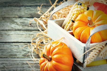 Autumn harvest setting with pumpkins and cornの写真素材