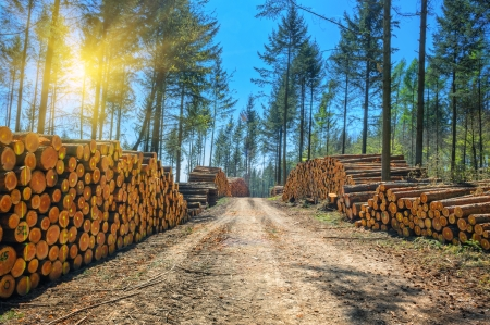 Photo pour Log stacks along the forest road at sunny day - image libre de droit