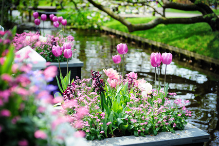 Beautiful flowers in Keukenhof Gardens, Netherlands