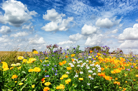 Photo pour Landscape with colorful summer flowers - image libre de droit