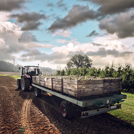 Old tractor carrying wooden crates with freshly harvested pears