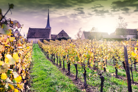 Sunset over autumn vineyards of wine route. France, Alsace