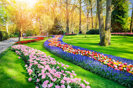Foto de Spring landscape with multicolor tulips. Nature background - Imagen libre de derechos