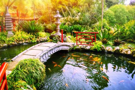 Foto de Japanese garden with swimming koi fishes in pond. Nature background - Imagen libre de derechos