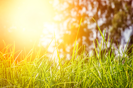 Foto de Summer landscape with green grass at sunny day. Nature background - Imagen libre de derechos