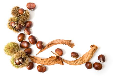 Autumn template of chestnuts isolated on white with copy space