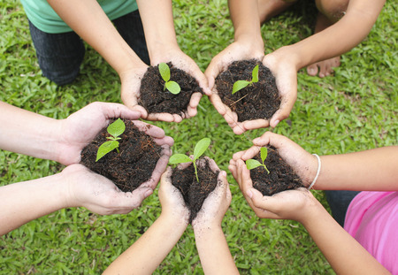 Photo for Hands holding sapling in soil surface - Royalty Free Image