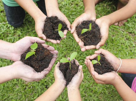 Hands holding sapling in soil surface