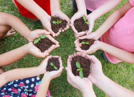 Hands holding sapling in soil surface.