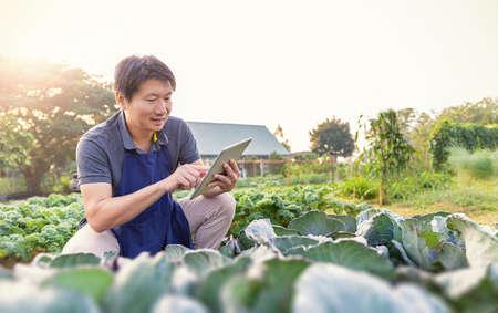 Foto de Portrait of happy sme owner asian man working with tablet gardening cabbage farm, nursery worker planting in organic farm, startup small business sme owner, asian farmer, fresh vegan food concept - Imagen libre de derechos