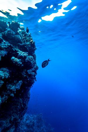 Photo pour The deep blue water of the red sea. - image libre de droit