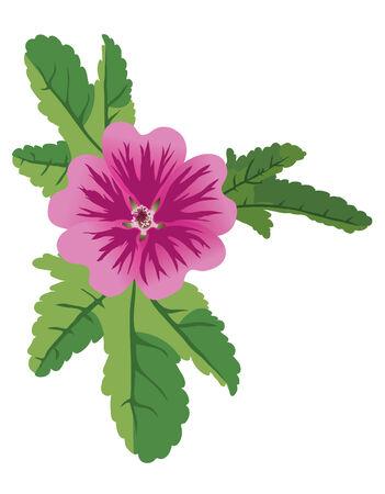 vector illustration of mauve flower malva