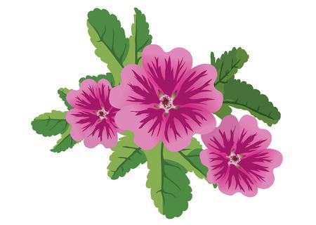 vector illustration of 3 flowers malva