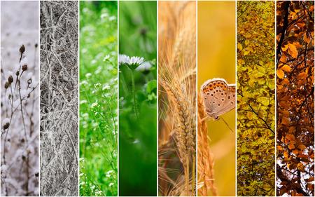 Four seasons collage: Winter, Spring, Summer, Autumn.
