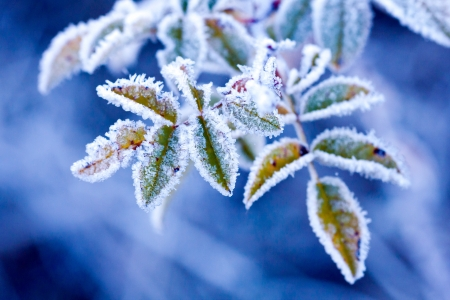brunch in frost - very shallow focus