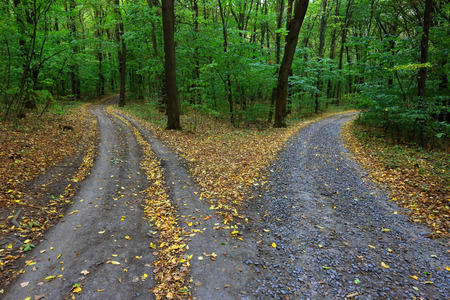 Foto de Landscape with fork rural roads in forest - Imagen libre de derechos