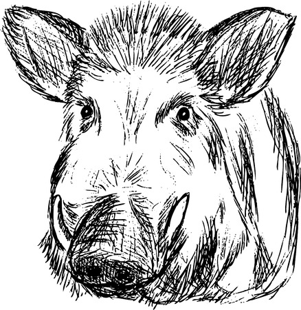wild boar , hand draw, isolated on background