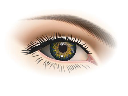 Illustration pour Female eye closeup. Vector - image libre de droit
