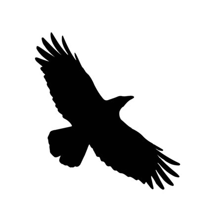Illustration pour eagle flying with spread wings silhouette on white - image libre de droit
