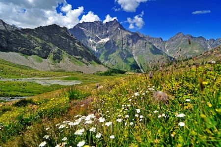 alpien flowers meadow with mountain view in Valle dAosta, Italy