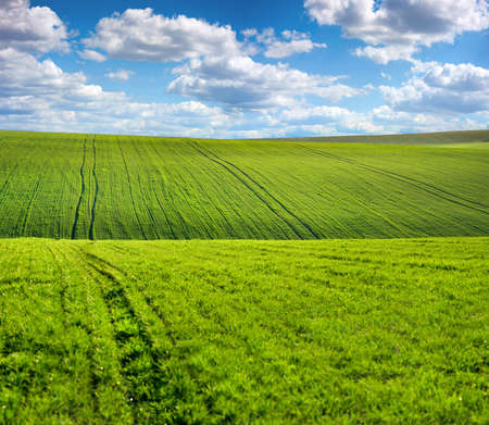 Photo pour green sprouts on the hills of the agricultural field, spring landscape and sky with clouds - image libre de droit