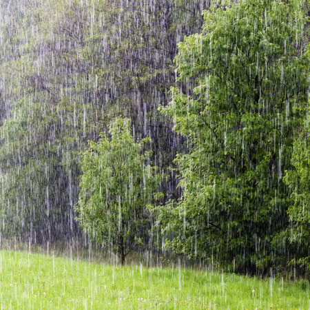 Heavy rain of spring shower in a green field and forest.