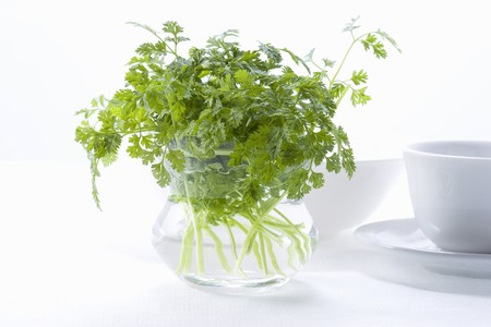 Chervil in the glass pot on white background