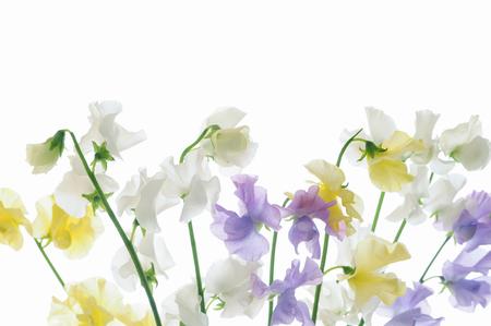 White background Hatsukaichi flower arrangements