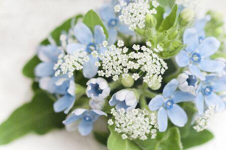 Star Flower and Carrot Flower Bouquet