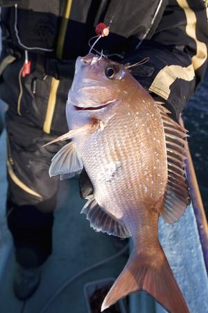 Fished red sea bream