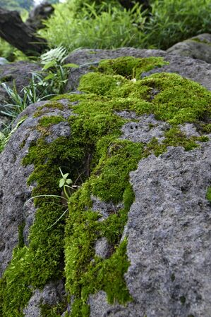 Clean mosses attached firmly to the garden stones