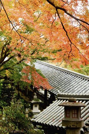 Foliage of the hasedera Temple