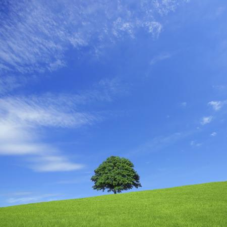 Ippongi meadow