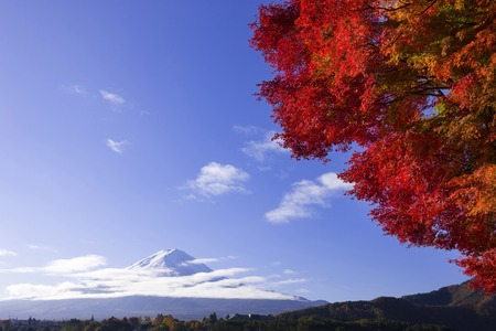 Fall foliage and Mt. Fujiの写真素材