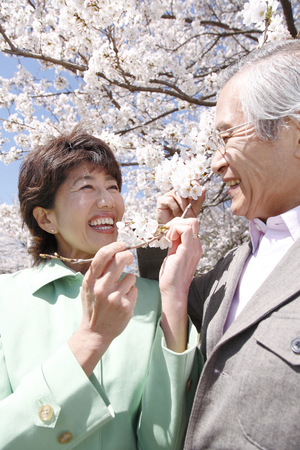 Elderly couple that have a cherry blossom viewingの写真素材