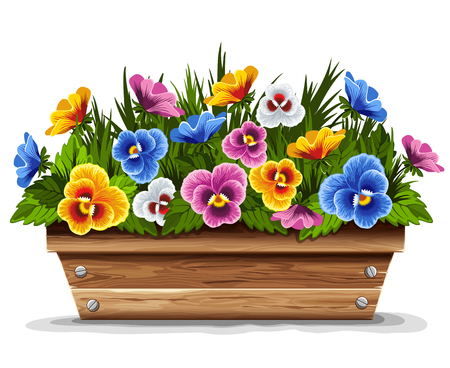 Wooden flower pot with multi colored pansies. Vector illustration.