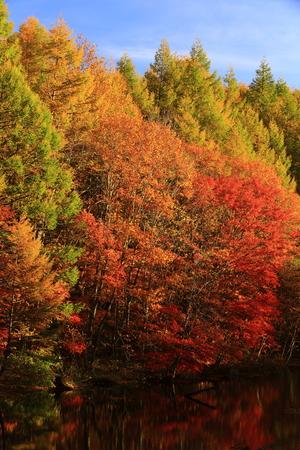 Foto de Hachimantai autumn Iwate Prefecture - Imagen libre de derechos