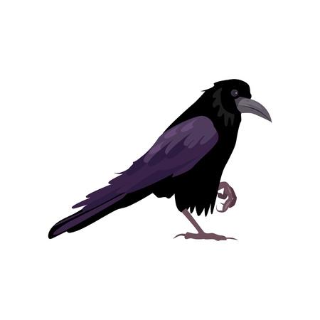 Illustration pour Black raven illustration. Bird, black, mystic. Nature life concept. Vector illustration can be used for topics like nature, animal world, encyclopedia - image libre de droit