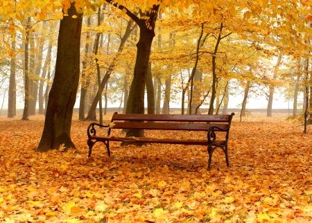 bench in golden autumn park in foggy day