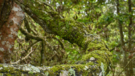 Green moss growing on tree at the evergreen forest