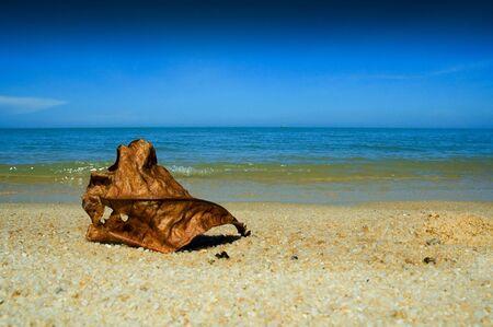 A dried leaf on a beach