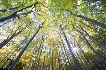 view of  a beech forest in the natural park of Moncayo, Zaragoza, Aragon, Spain