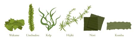 Illustration pour Cartoon seaweed set vector graphic illustration. Collection of natural algae marine plant - image libre de droit