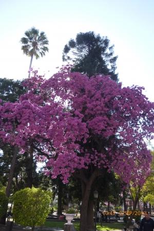 colores hermosa plaza de arboles Variados