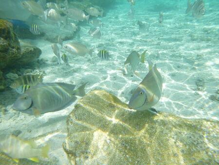Peces De Colores Variados Nadando En El Oceano